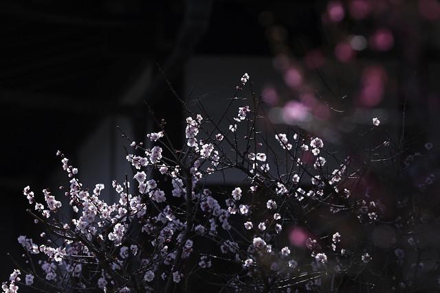 20140321-_DX_3498