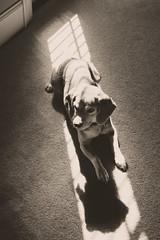 15/100 Roscoe Dogg