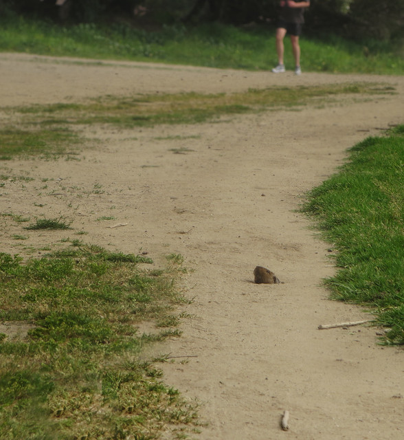 Gerbil hole at Polo Fields, Golden Gate Park, San Francsico (2014)