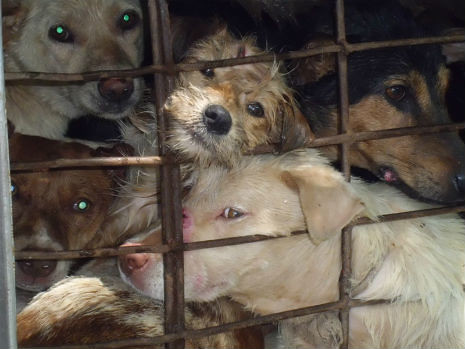 Hond transportion