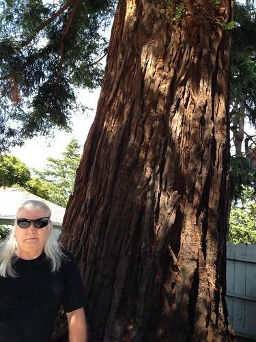 IMG_2580 MB and redwood