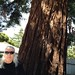 IMG 2580 MB and redwood