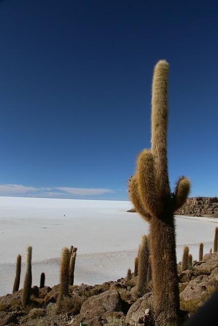 Incahuasi island.  Uyuni Salt Flat.  Bolivia.