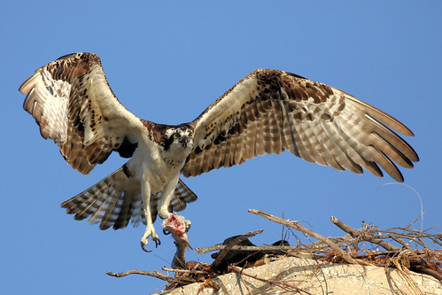 ft desoto park sunset wildlife birds flight 7d2 7dm2