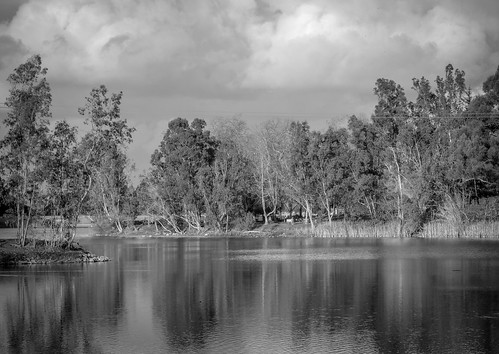 ca trees blue california monochrome vasonalakecountypark park losgatos water outdoor green bw blackandwhite lake clouds unitedstates us