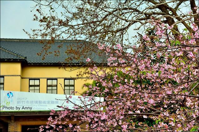 麗池櫻花5