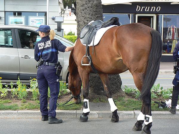 cheval sur la Croisette