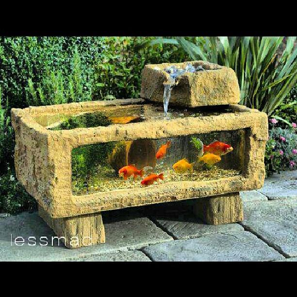 Me gust este acuario para mi jard n funci n de fuente for Peces para estanque de jardin