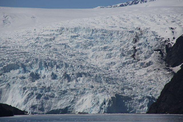 Holgate Tidewater Glacier and Small Cruise Ship
