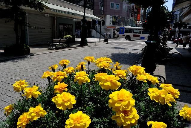 shizuoka_13_7_48