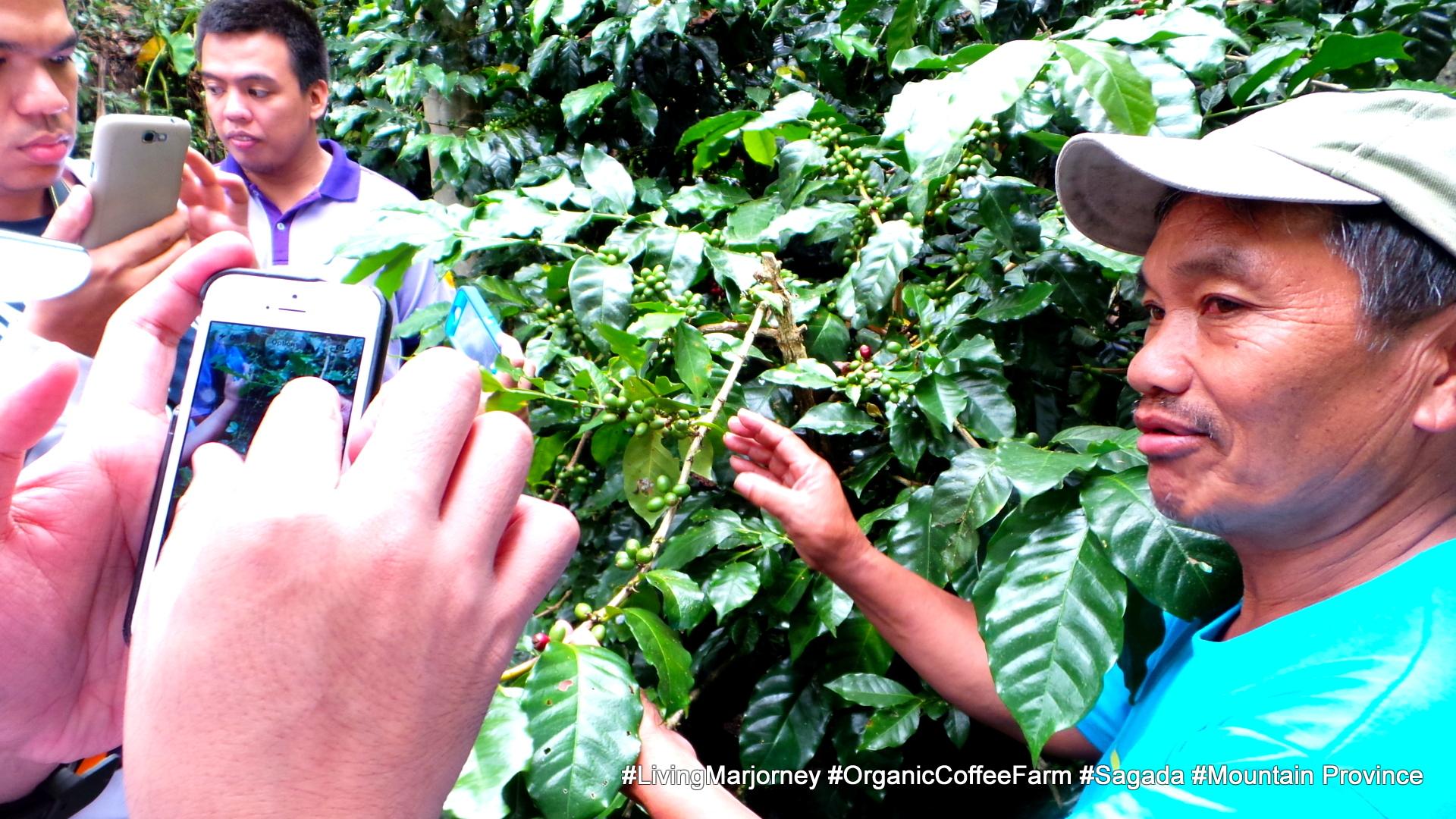 http://www.livingmarjorney.com/2013/08/sagada-organic-coffee-farm.html