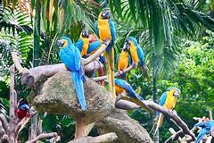 Macaw Meetup