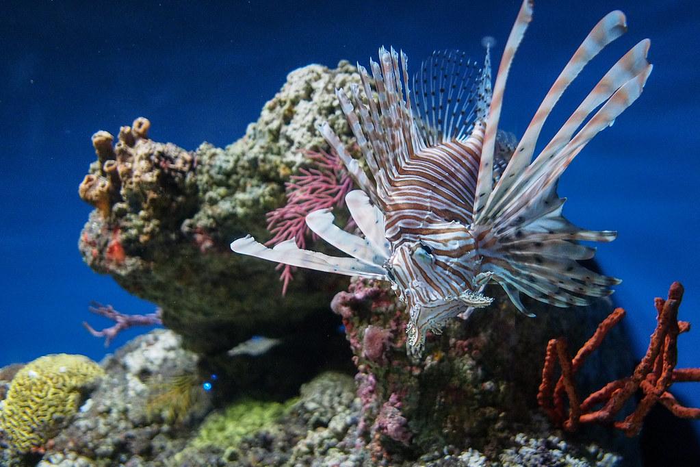 Baltimore aquarium|Maryland
