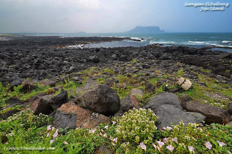 Seongsan Ilchulbong volcanic crater in Jeju Island