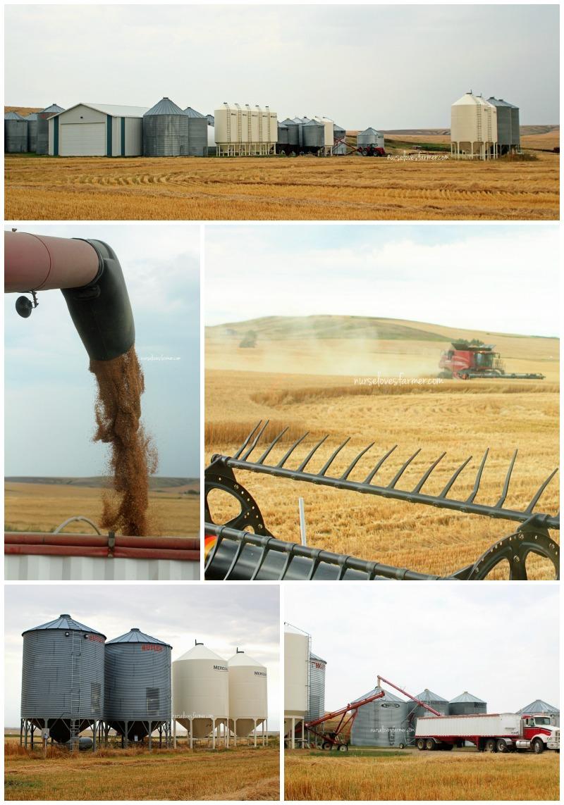Harvest13