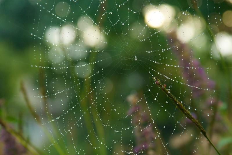 spiderweb  3630