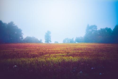 fog landscape nikon nikkor f28 45mm d800 pce