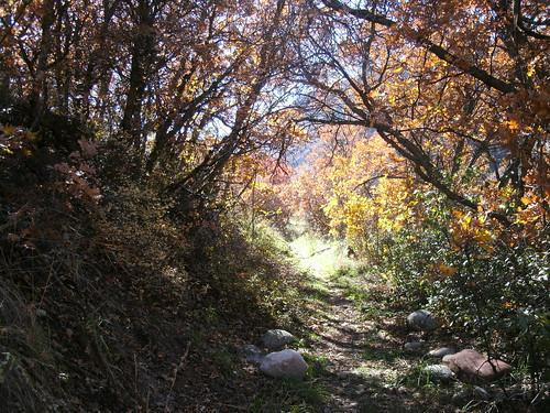 ditchline path, 10.23.13