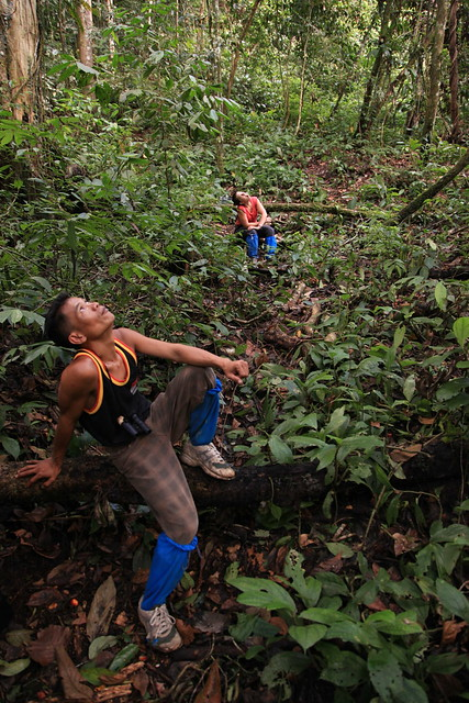 Searching for Orangutans in Sumatra