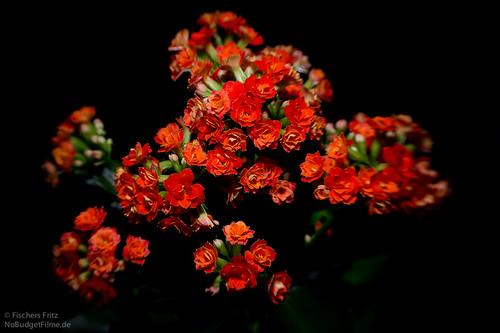 Little_Flowers_Lensbaby.jpg