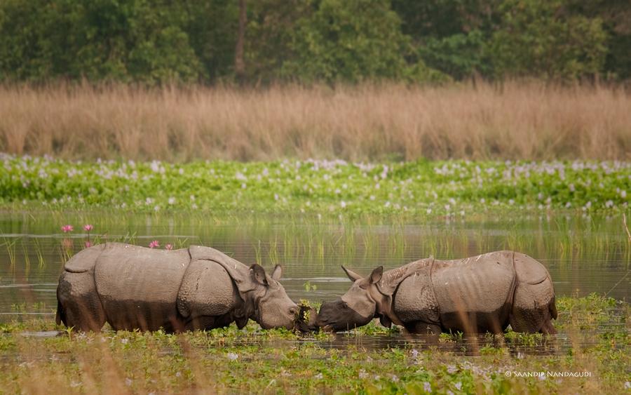 Rhino2-col