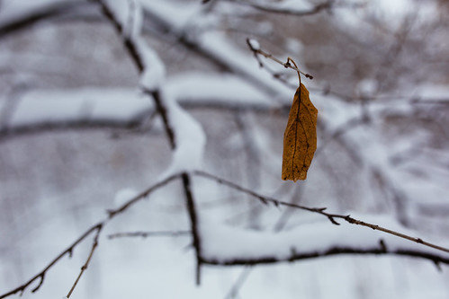 winter snow cold nature closeup wisconsin canon leaf branch depthoffield newberlin canoneos5dmarkiii sigma35mmf14dghsmart