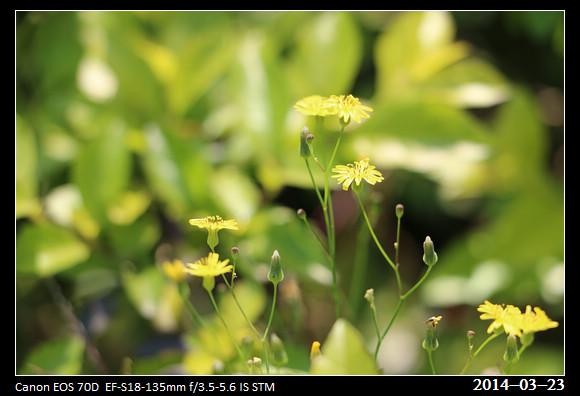 3_20140323_Yellow