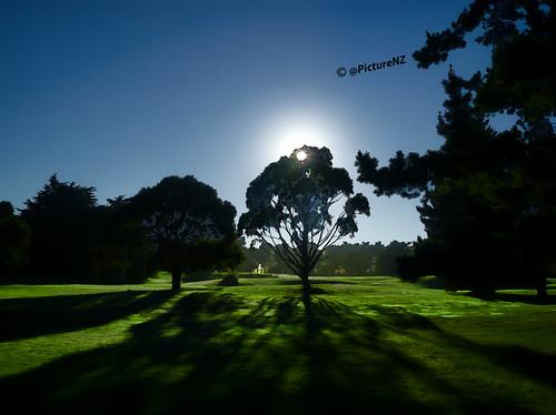 blue shadow sun tree green grass silhouette glow bright golfcourse