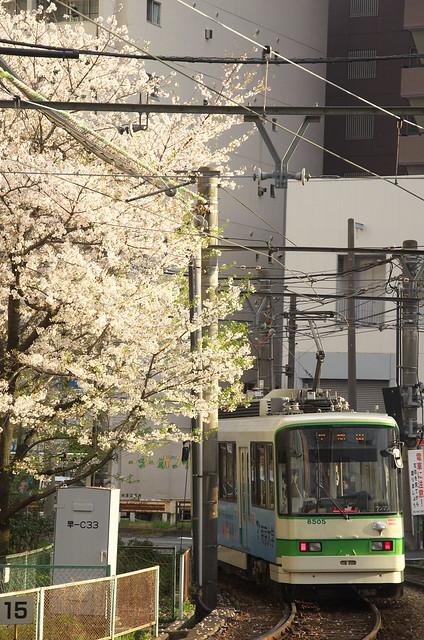 Tokyo Train Story 都電荒川線 2014年4月5日