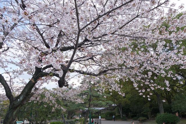 2014 鶴舞公園 花見(2014 Tsuruma Park)