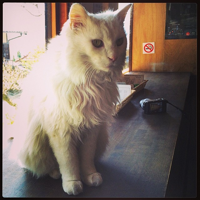 Found this beautiful white kitty in the rest stop  Very ma… | Flickr