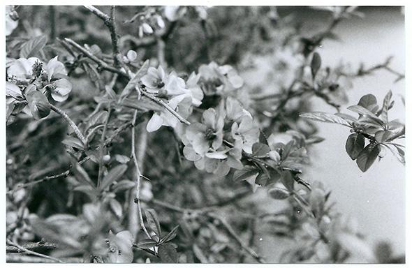 Lyon_fleurs