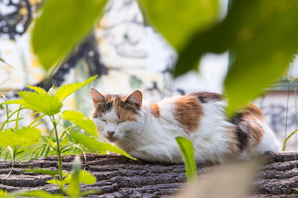 Кошка в Юрьеве-Польском