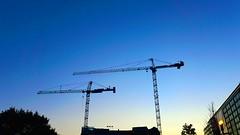 DC Dance of the Cranes 59107