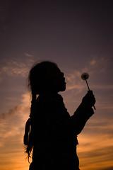 cloud, backlighting, sunlight, evening, light, silhouette, morning, darkness, sky, dusk, sunset, sunrise,