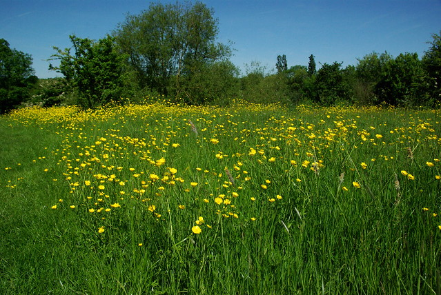 The Year of the Buttercup