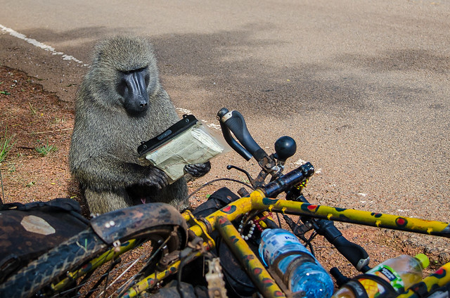 Baboon Map Reader