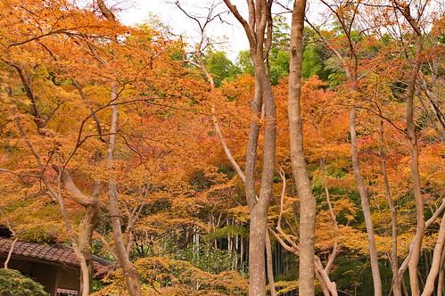 【写真】2012 紅葉 : 祇王寺/2021-09-05/IMGP7848
