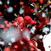 Confetti flies for Scott Dixon in Pocono's Victory Lane