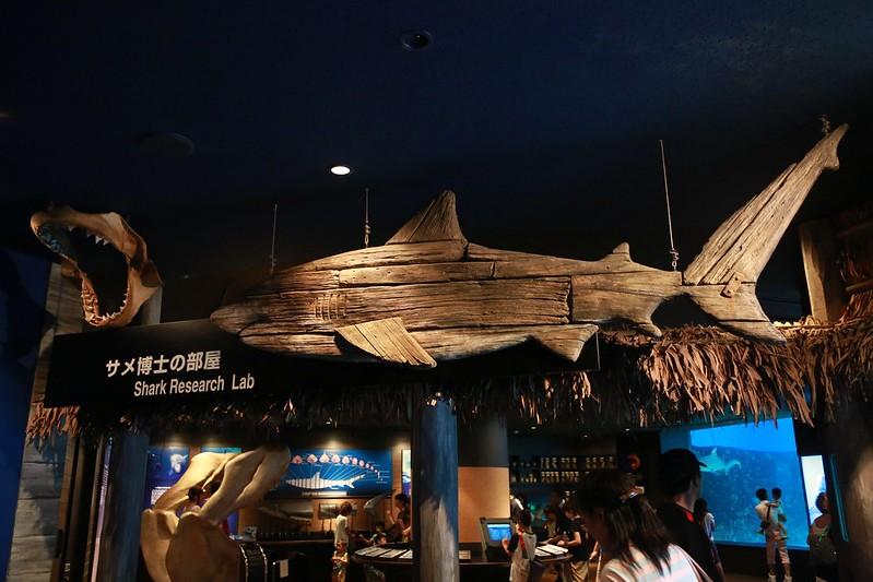 鯊魚博士的家