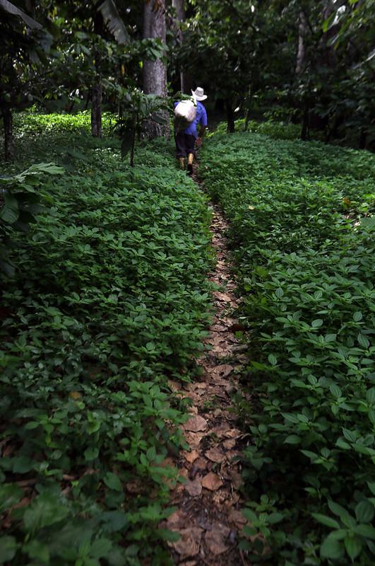(3)VENEZUELA-CARABOBO-INDUSTRIA-AGRICULTURA