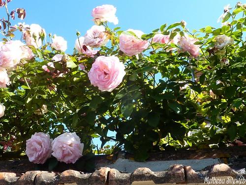Jardins&patrimoine luisantais