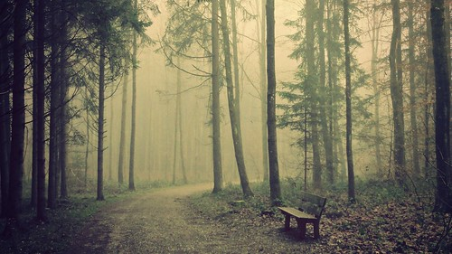 nature sunshine fog forest sunrise bench landscape switzerland woods foggy hss