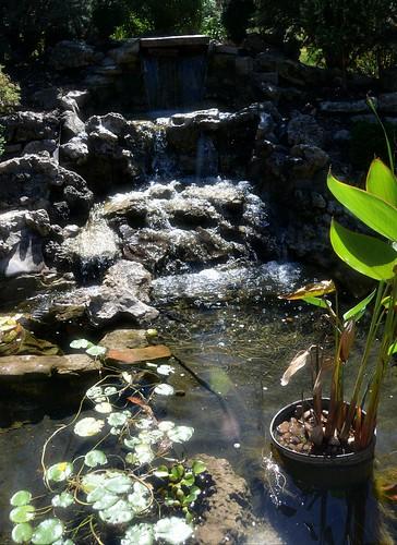 waterfall pond landscaping nathanaelgreenepark closememorialpark