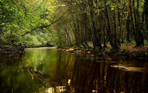 county autumn trees ireland green leaves river nikon rocks long exposure estate foliage powerscourt wicklow enniskerry riverwalk dargle d5100