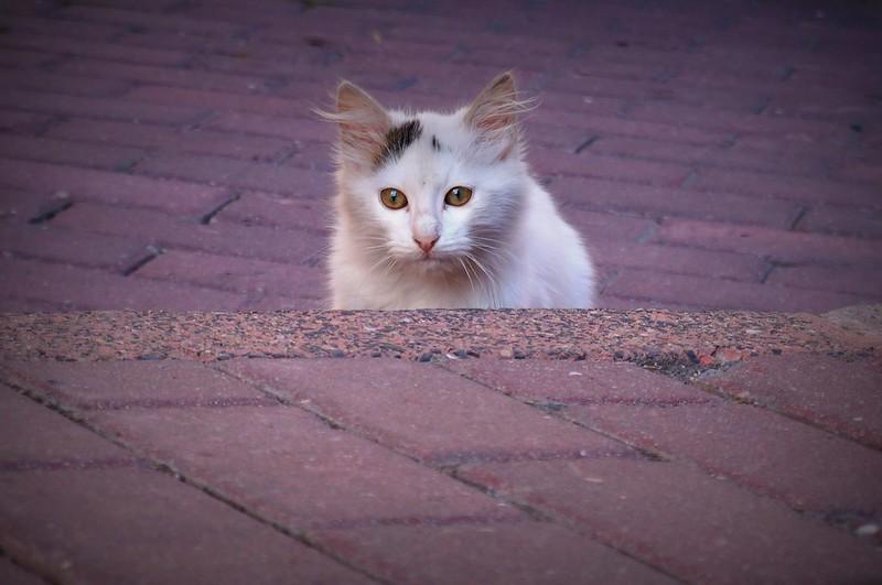 Stray-Cats-Istanbul-22)