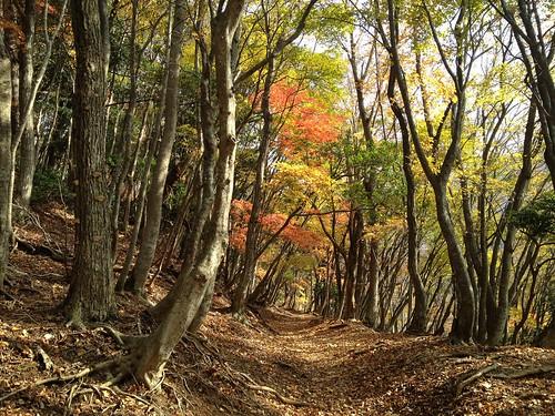霊仙山 榑ヶ畑コース 登山道