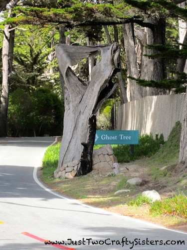 17 Mile Drive- Ghost Tree