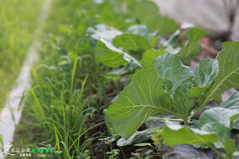 綠翠微農場 (28)
