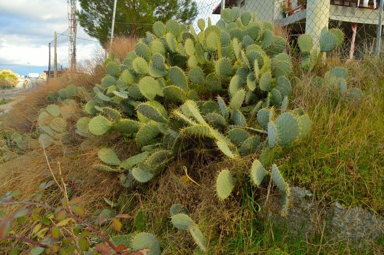 lara-vazquez-madlula-blog-cactus